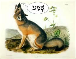 Switft Fox Shema