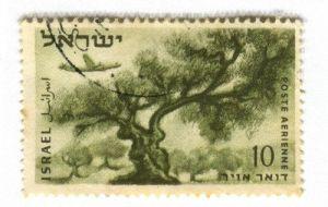 BFB140224 Olive Tree