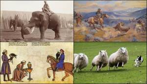 Working Animals.  Clockwise from top left:  Elephants at Work (Photo:  Animal History Museum); Loops and Swift Horses are Surer than Lead, by Charles Marion Russell (Amon Carter Museum);  Illustration from On the Art of Hunting with Birds, Holy Roman Emperor Frederick II (1194-1250) (Wikimedia Commons); Dog rounding up sheep (Warrenfyfenews.org/where-do-working-dogs-go-when-they-retire/).