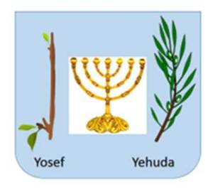 Yehuda's stick has become a nation.  Yosef's is just beginning to bud.