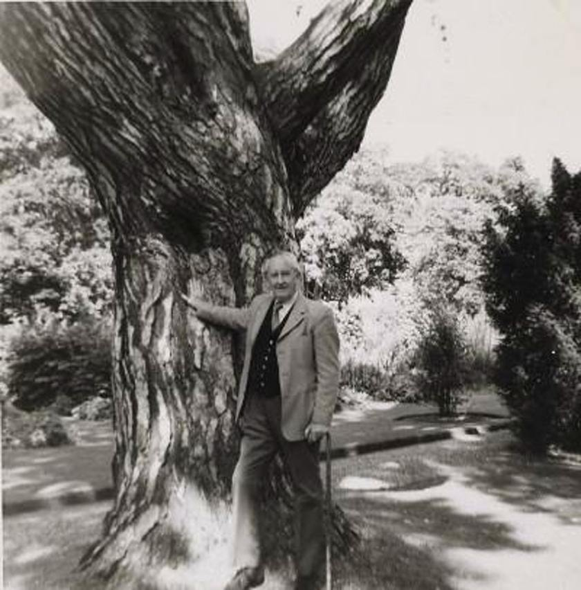 BFB201213 Tolkien at Tree